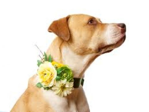 How to Have a Doggie Darn Good Wedding