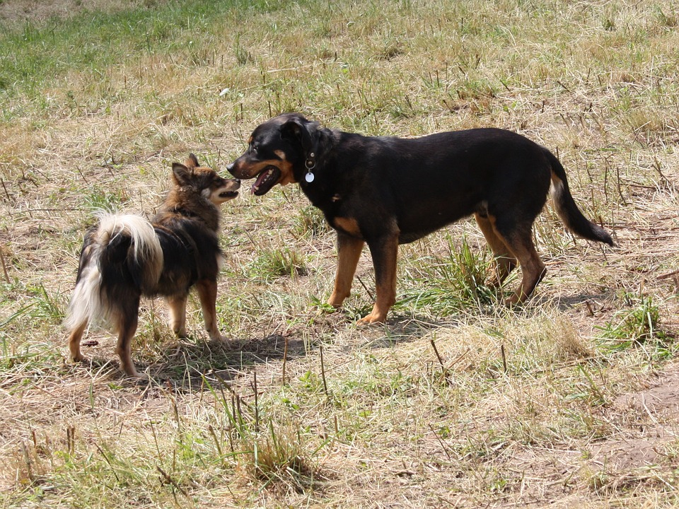Charlie and Tahlula: Two Dogs Together Again!