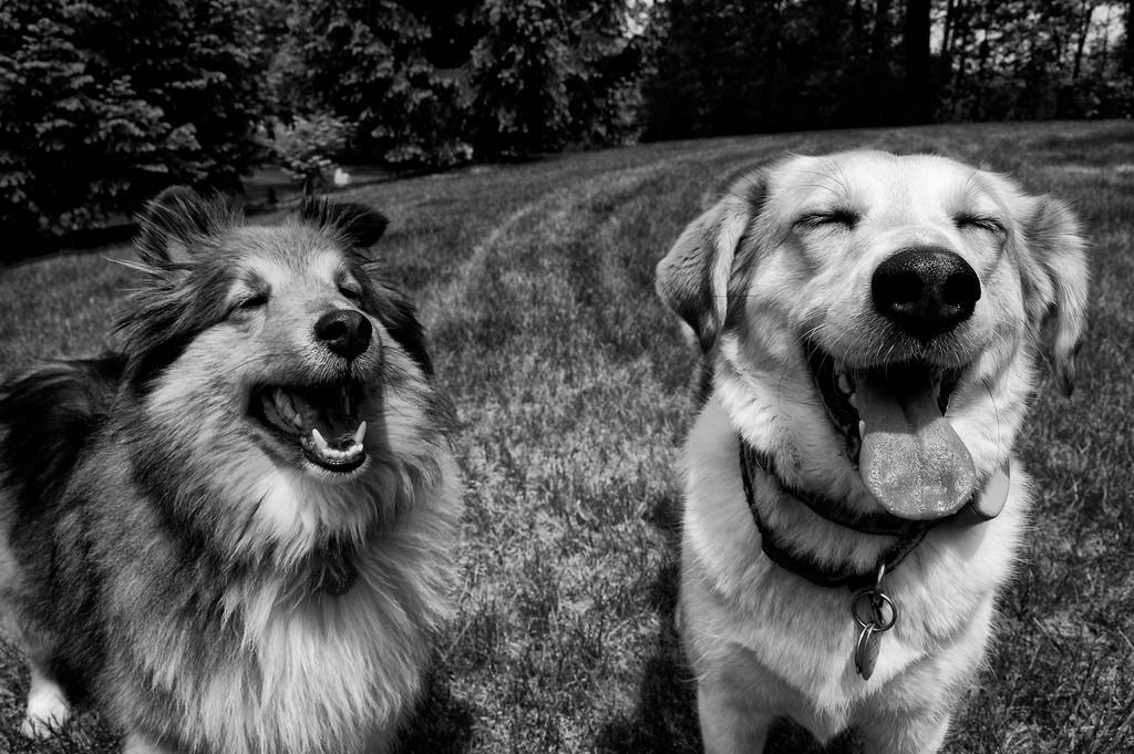 Dog Tip #5: Family Trips
