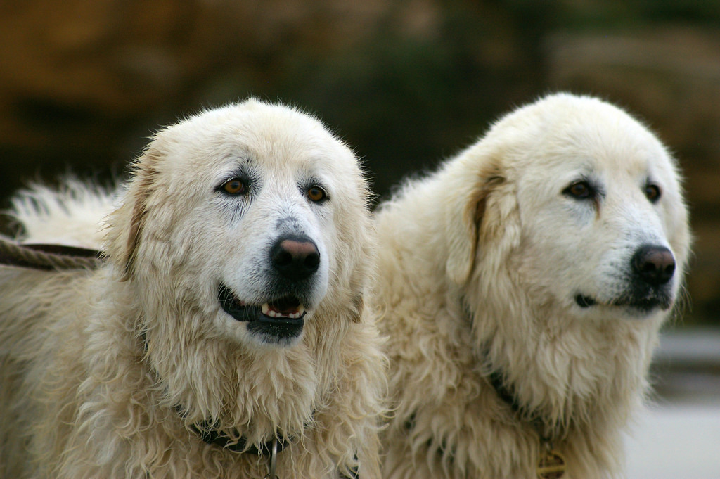 Signs of Health Problems in Older Dogs