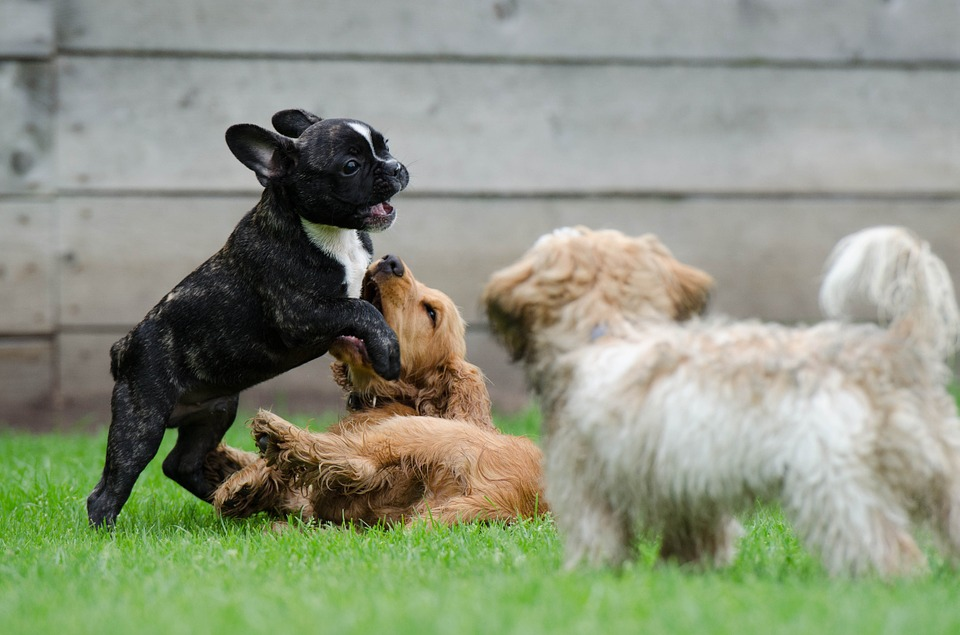 How to Stop Your Dog's Barking Habit