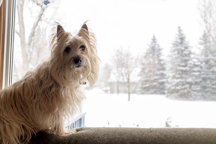 How to Deal with Your Dog's Dry Skin in the Winter