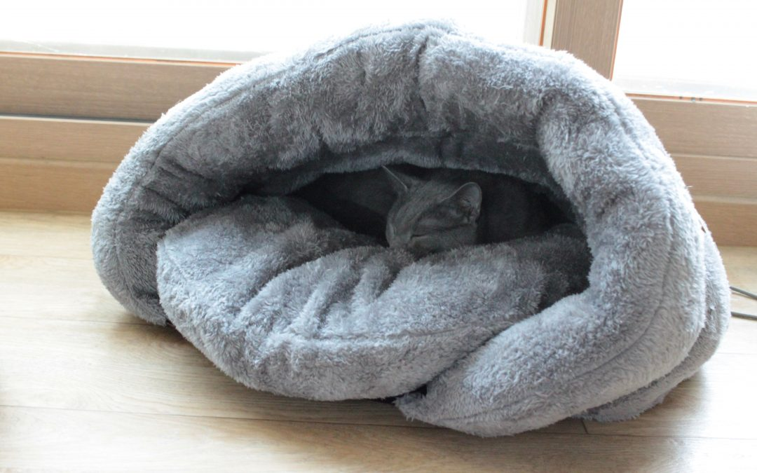 BINGPET Pet Bed Igloo Review: What to Know Before Buying