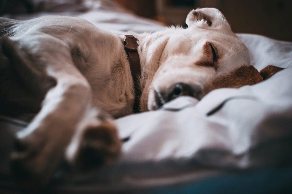 Pet sleeping on Kong Dog Bed