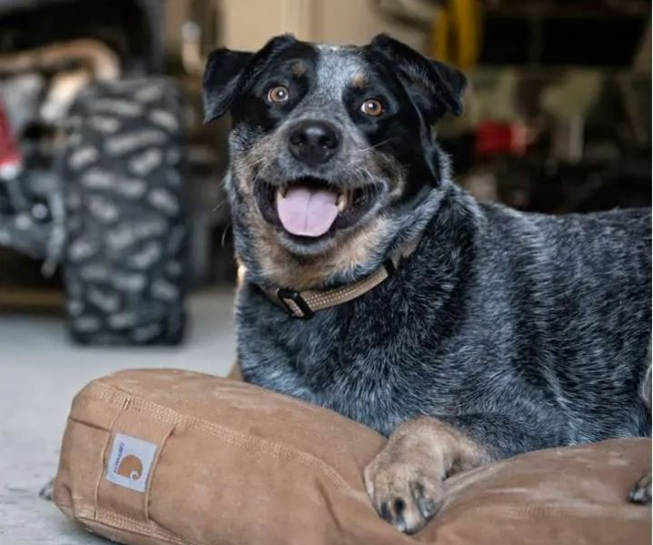 Carhartt Dog Bed Review – Pros and Cons That You Should Know