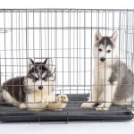Dogs In Crate