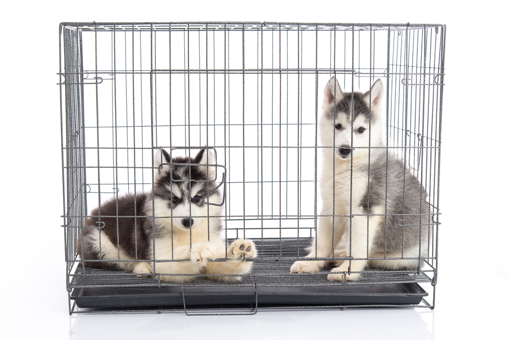 Kong Dog Crate Review: Security and Durability that Last