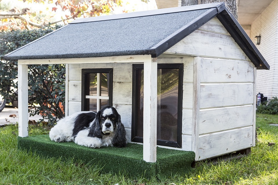 Build a DIY Dog House That'll Make Your Neighbors' Dogs Jealous