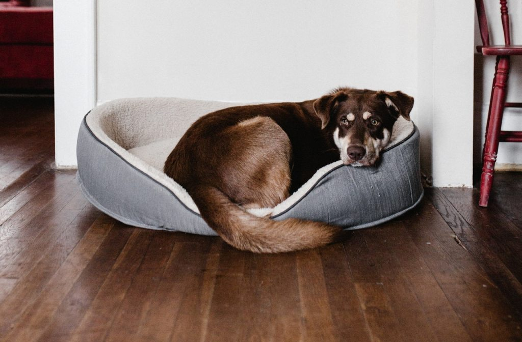Dog on pet bed cushion