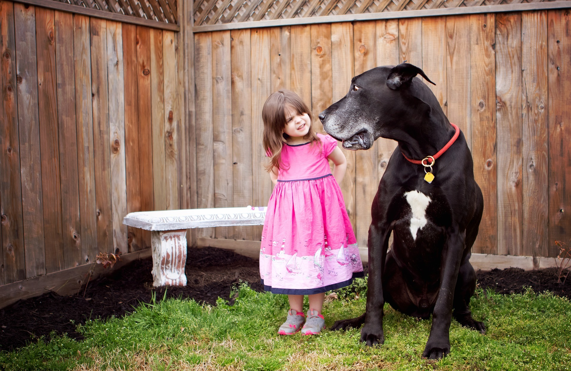 dog with cute girl