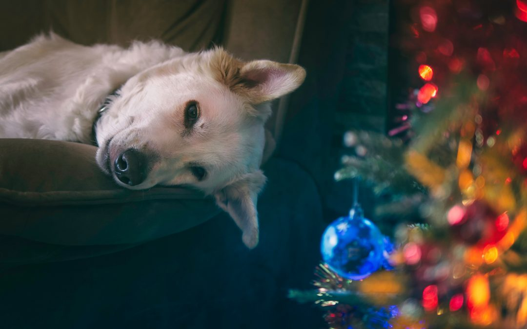 Dog Stocking Stuffers Your Best Friend Will Love this Christmas
