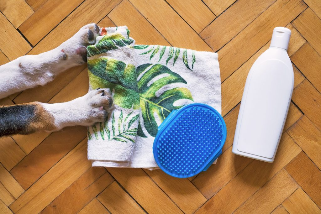 A dog's front paws, a bath brush, a towel, and a bottle of shampoo for DIY dog grooming