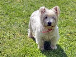 Dog Training: Learning to Walk at Heel on Leash