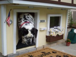 How to Choose the Best Doghouse for Your Pet