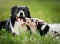 Getting a Second Dog: How to Avoid Problems with the Elder Dog?
