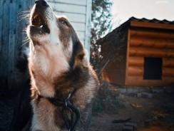 Avoiding and Surviving a Dog Attack