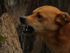 What Causes Dogs to Behave Badly?