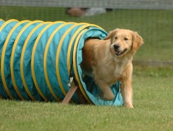 Training Dogs Who Have Non-Traditional Thought Processes