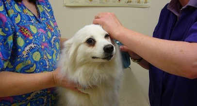 Helpful Tips to Keep Your Dog Healthy