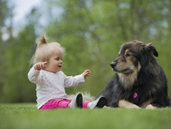 Guide to Getting Your Dog Ready for a New Baby