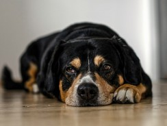 Common Types of Dog Allergies