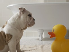 Dog Shampoo and Conditioner : Beating the Smelly Dog Syndrome