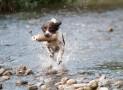 Should You Reward Your Dog for Misbehaving?