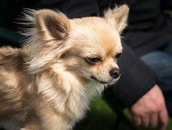 Owning a Small Dog: Common Myths and Misconceptions