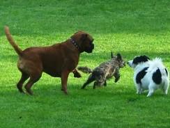 Understanding the Dogs