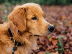 Why You Need a Lighted Dog Collar