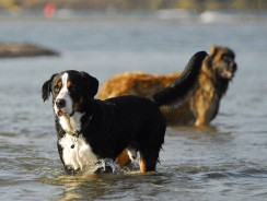 Training Your Dog to Become Obedient