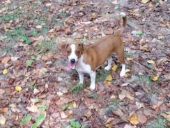 Taking The Dog Hiking