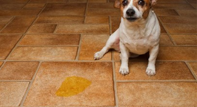 How to Help a Dog with a Thickened Bladder Wall