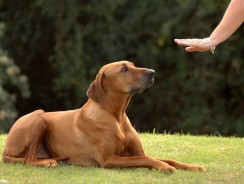 Teach Your Dog to Sit and Stay