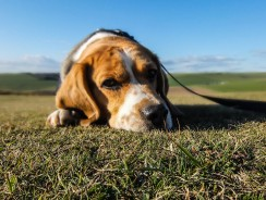 How to Train Dogs with Separation Anxiety