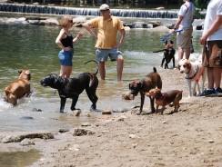 Best Dog Parks in Arlington, Virginia