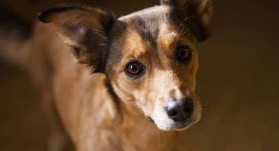 The Danger of Dog Muzzles