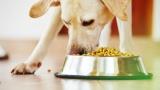 The Natural Dog Food Alternatives?
