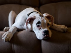 Should You Get Your Dog Health Insurance?