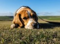 How to Curb Your Dog's Separation Anxiety