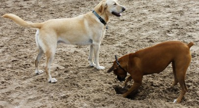 How to Train Your Puppy or Dog to Stop Jumping