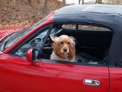 Why You Need a Dog Seatbelt