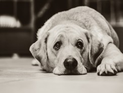 A Few Facts About Dog Yeast Infection