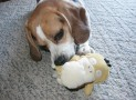 What Causes Chewing in Dogs?