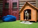 5 Must Have Items In Your Dog House!