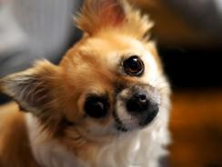 Good Dog Breeds for Children
