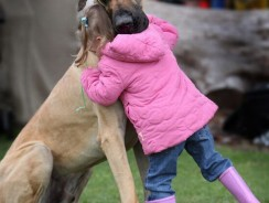 How to Choose a Good Dog for Kids