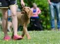 Dog Training Help