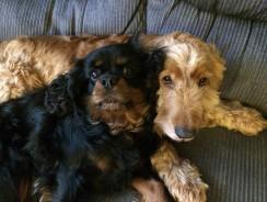 Choosing a Puppy or an Older Dog?