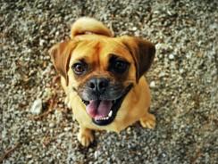 Pet Treats: Dog Biscuits and Cat Nip Treats